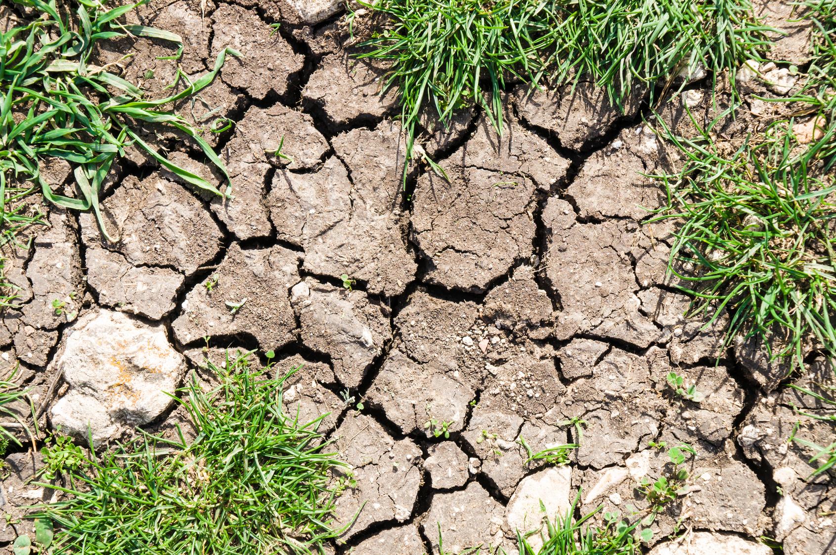 problem soil contractor